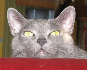 Cathead2.jpg