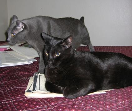 Catsout.jpg
