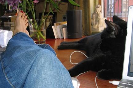 boredwithcats2.jpg