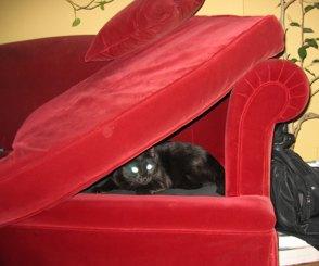 catfort.jpg