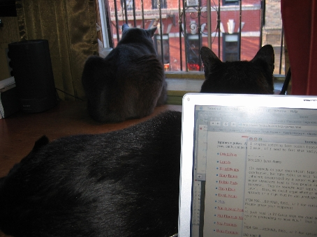 catwatch.jpg