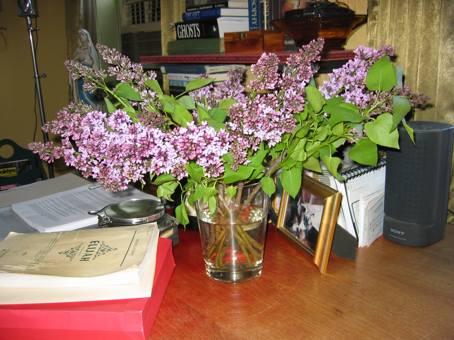 lilacs2.jpg