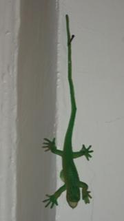 lizard.jpg