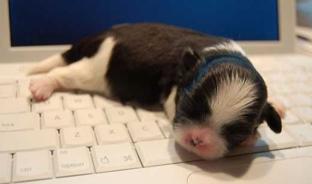 puppykeyboard.jpg