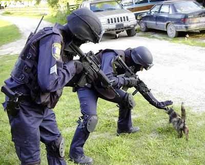 scaredofcat.jpg