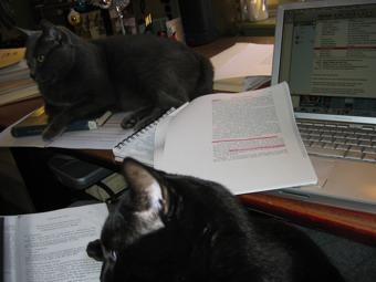 workcats.jpg