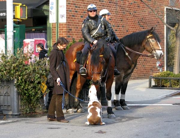 doghorse3
