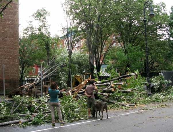 Downed Trees on Bleecker Street