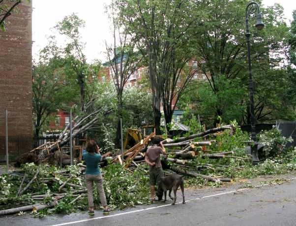 Downed Trees on Bleecker Street