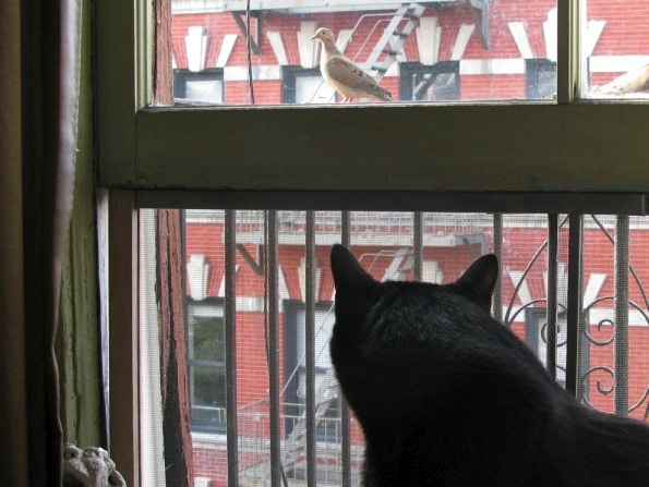 My Cat Watching a Bird