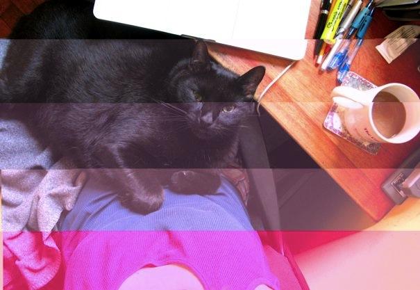 Finney on my Lap