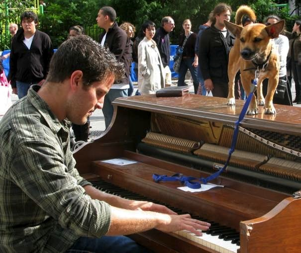 Man playing piano in Union Square with Puppy