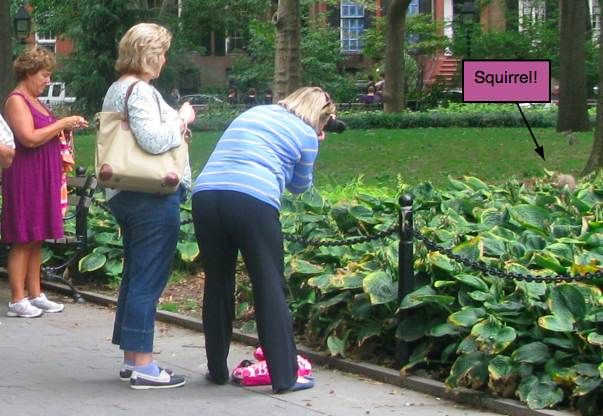 People taking pictures of a squirrel in Washington Square Park