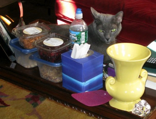 My Cat Buddy on the Coffee Table