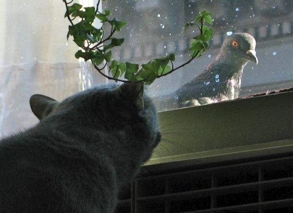 Cat Wants Pigeon