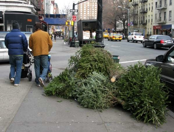 Discarded Christmas Trees on Hudson Street
