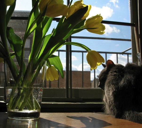 FlowersCat