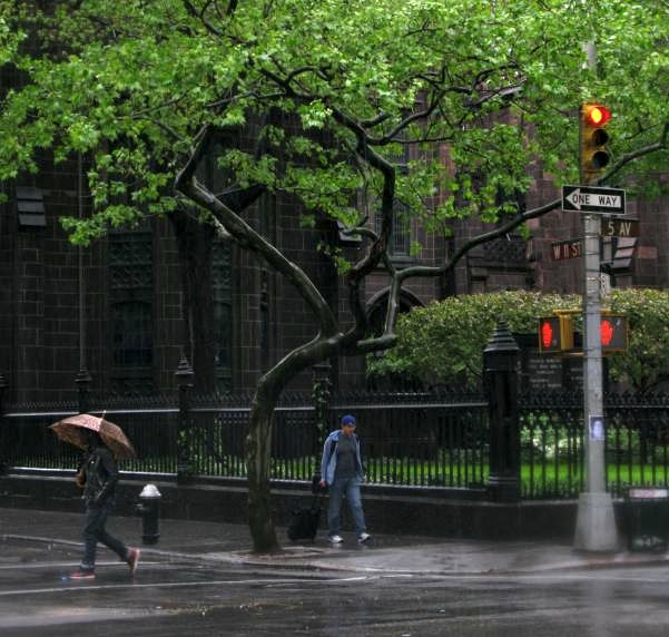 Tree at the Corner of 11th Street and 5th Avenue