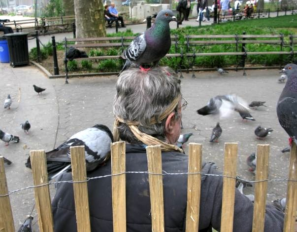 Feeding Pigeons, Washington Square Park, New York City