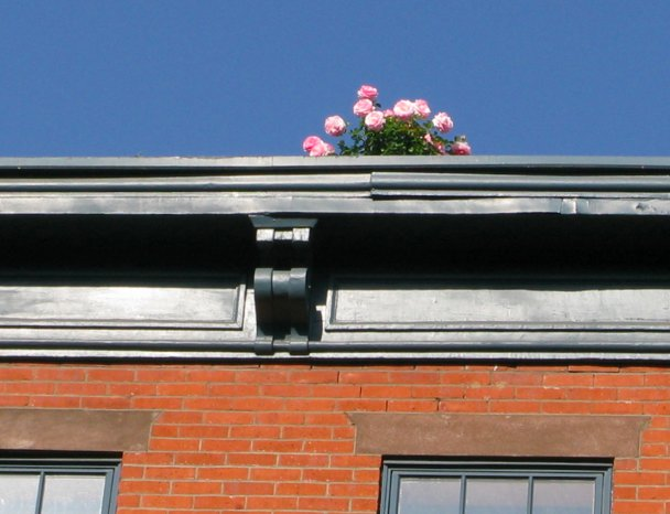 Flowers on Bleecker Street Roof