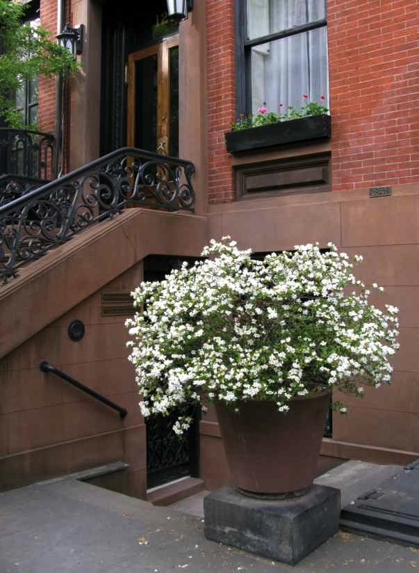 Pot of flowers on 11th Street