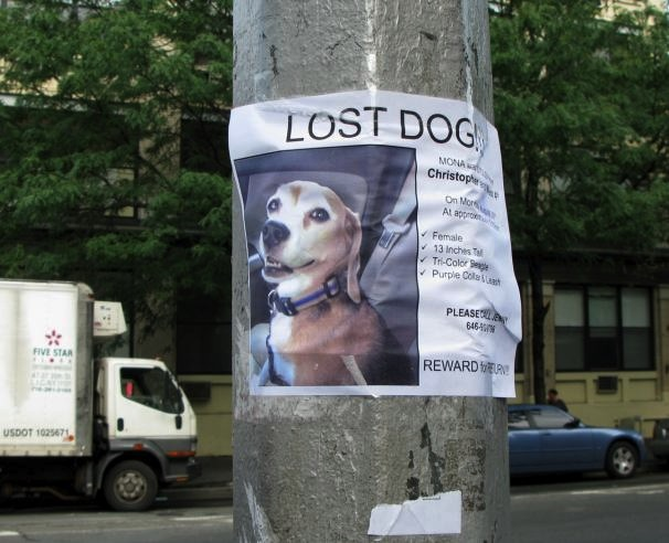 Lost Dog Poster, New York City