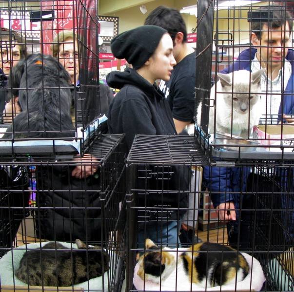 Adoption Event, Petco, Union Square