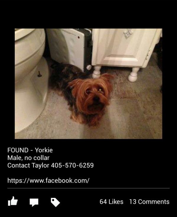 Found Pet, Moore, Oklahoma