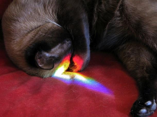 Catlight