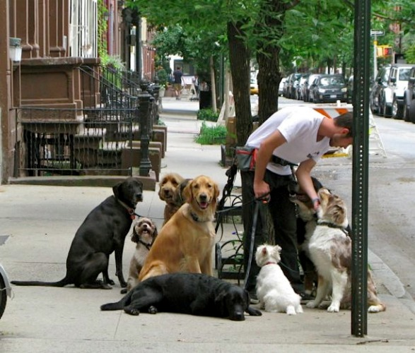 Dog Walker, New York City