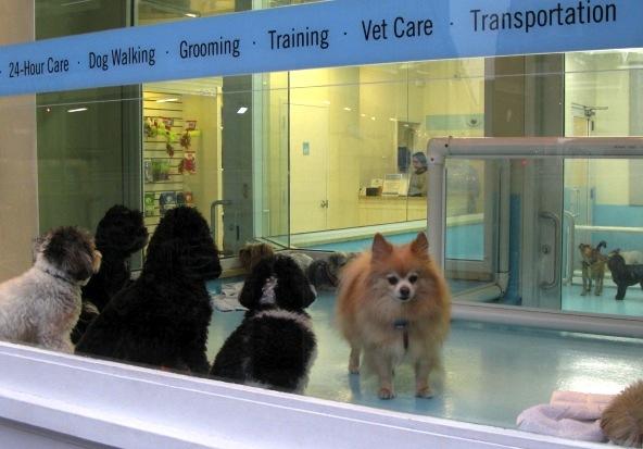 Doggie Daycare, Tribeca, New York City, 2014