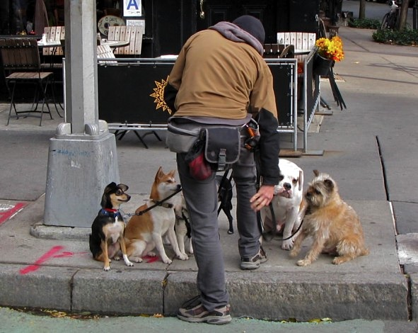 Dog Walker, West Village, New York City
