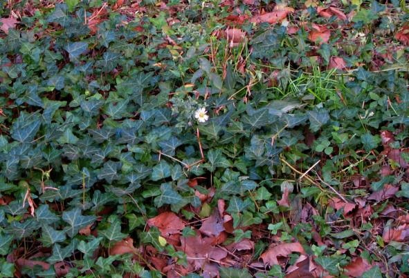 Solitary Autumn Flower, New York City