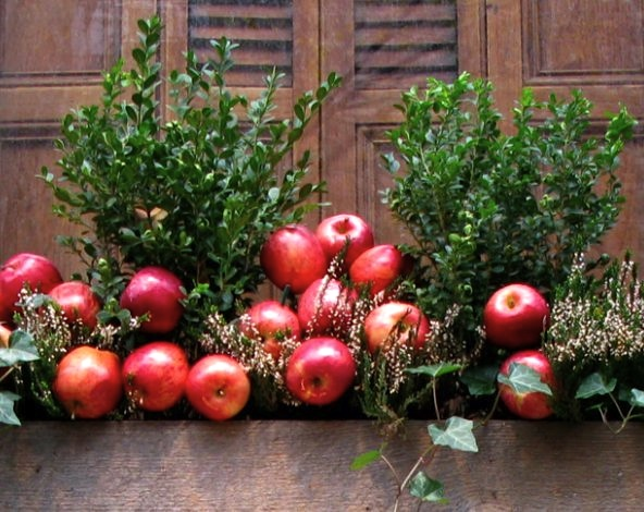 Apples, Christmas Decorations, New York City