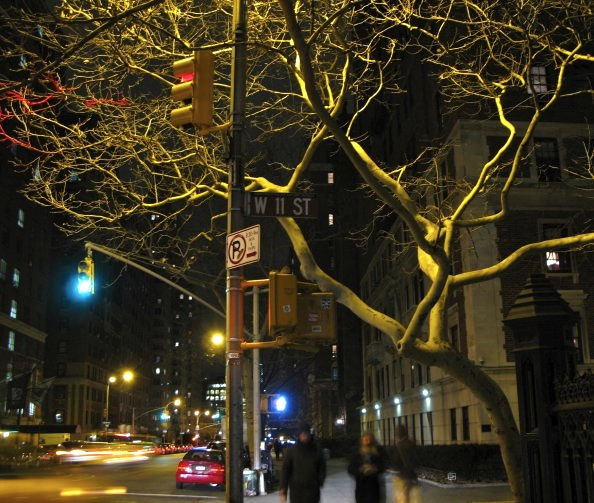 Tree, Greenwich Village, New York City