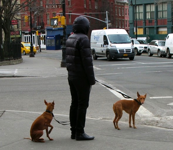 Dogs, Bleecker Street, New York City