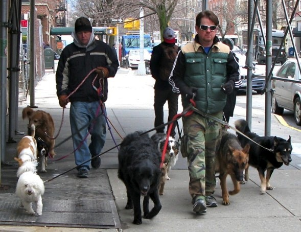 Dog walkers, New York City