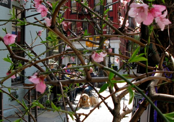 Flowers on Perry Street, New York City