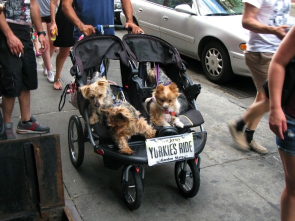 Yorkies, West Village, New York City