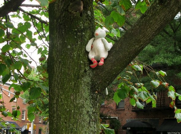 Stuffed Animal in Tree, West Village, New York City