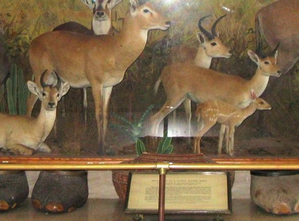 Vanderbilt Museum, Long Island