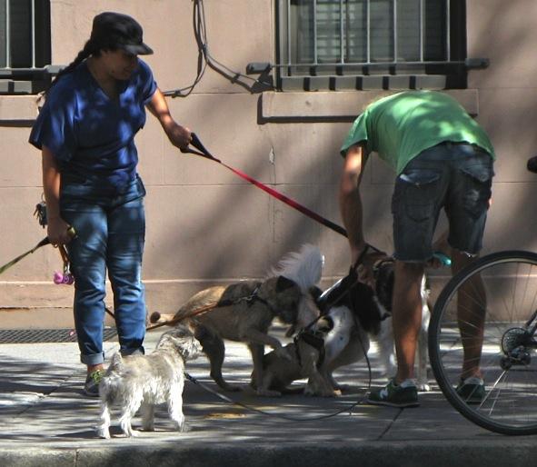 Dog Walker Tangle, Hudson Street, New York City