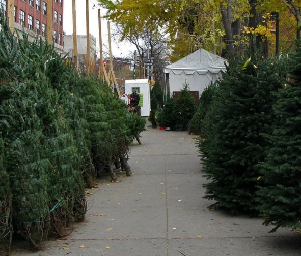 Christmas Trees, New York  City