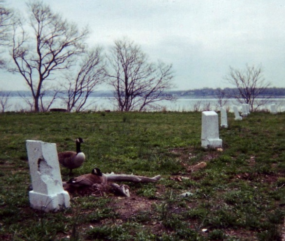 Hart Island, New York, Potter's Field
