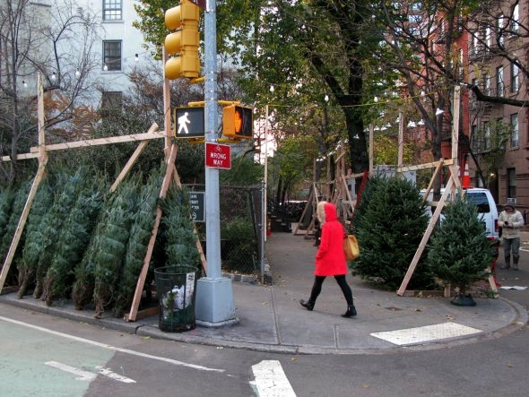 Christmas Tress, West Village, New York City